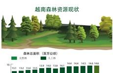 图表新闻:越南森林资源现状