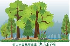 图表新闻:河内市森林覆盖率达 5.67%