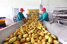 荷兰是越南蔬果的潜在市场