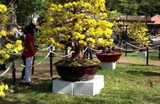 平定省梅花之都积极备战春节    鲜花绿植受青睐
