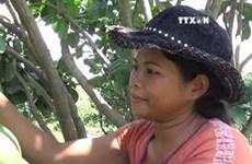 绿皮柚子种植帮助宁顺省山区脱贫致富