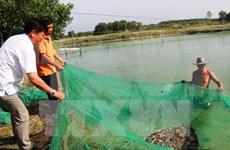 朔庄省种稻养虾模式可持续发展成效显著