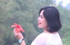 清化省红艳艳的木棉花吸引众多年轻人的眼球