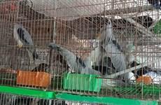 关闭野生动物市场   严控新冠肺炎疫情传播