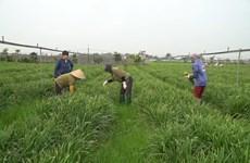 河内市开展新种植模式  有机蔬菜可以直接生吃