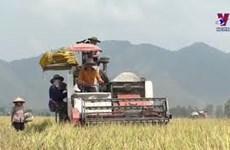 农业一直是推动越南经济发展的重要支撑