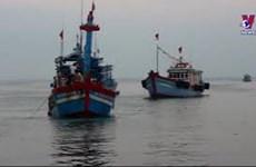 越南为打击非法、不报告和无管制捕捞做出不懈努力
