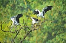 组图:探索宁平省通岩鸟园的自然原始之美