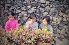 组图:荞麦花田——来河江省观光游览时非去不可的旅游景点