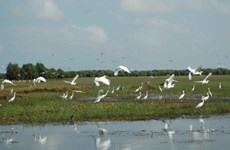 来鸟栖国家公园体验西部地区地道农活