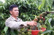 得乐省农民致力实现农业可持续发展