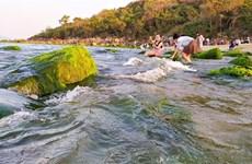 组图:越南旅游:南乌海边礁石上的苔藓季节
