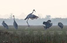 组图:摄影镜头下的越南特有鸟类生活