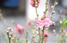 河内市古街上五颜六色的传统花卉集市