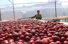 越欧自贸协定助推越南咖啡出口