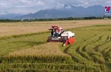 2020年越南农林水产品出口额将达400亿多美元