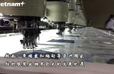 Fitch Solutions对越南纺织服装业给予积极评价