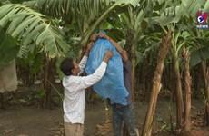 越南对柬扩大农业投资规模  为旅柬越裔创造稳定就业
