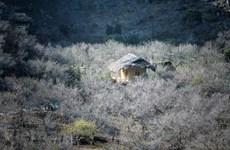 组图:春季初期木州高原拥有丰富多彩的自然景观