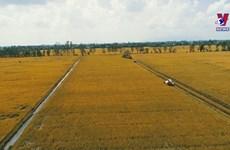 九龙江三角洲努力提高新时期农民阶级的地位
