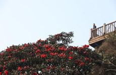 到番西邦峰观看花谷的美丽(组图)