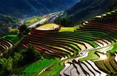 越南山区步入农耕季节(组图)