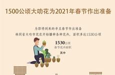 图表新闻:1500公顷大叻花为2021年春节作出准备