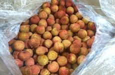 越南首两吨新鲜荔枝抵达日本