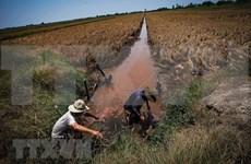全力找水源助力全国最大水稻生产基地防旱抗咸