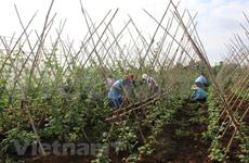 越南企业在疫情中寻求经营机会