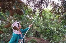 越南工商会:要全力做好疫情防控和企业帮扶