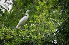 生物多样性补偿: 弥补大自然损失的机会
