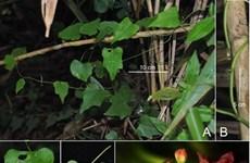 越南新发现3种新植物和3种昆虫