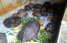 越南推出多项紧急措施阻止野生动物交易活动