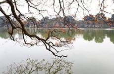 河内还剑湖大叶紫薇出嫩叶的浪漫季节(组图)