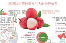 图表新闻:越南陆岸荔枝带来巨大的经济效益