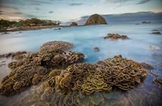 越南富安省燕岛美丽的珊瑚礁(组图)
