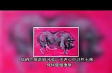 越南画家猪年年画为春节增添一抹色彩