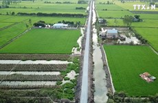 隆安省居民主动防治海水入侵  春季迎来好收成