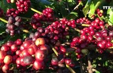 得乐省寻找新的发展方向提升咖啡价值