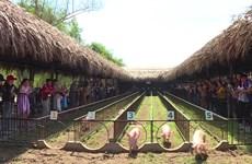 赛猪成为吸引游客赴芹苴市的有趣旅游产品