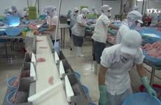 越南水产出口业努力迎难而上