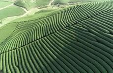 山罗省木州县农业生产朝着出口方向发展