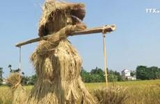 广义省首次举行丰收节  大力助推农村面貌提升