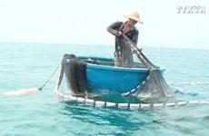 平定省鱿鱼养殖模式效果良好  为渔民带来稳定收入