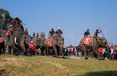 越南独一无二的赛象节