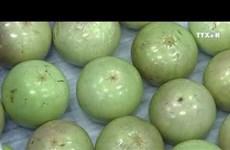 越南成功出口6种新鲜水果