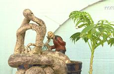 第15届亚太盆栽与赏石大会在胡志明市开展