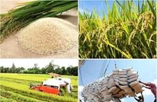 中国一直保持越南大米第一大大米出口市场的地位