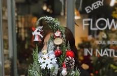 越南消费者纷纷购买天然松树喜迎圣诞节
